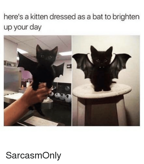 Funny, Memes, and Bat: here's a kitten dressed as a bat to brighten  up your day SarcasmOnly