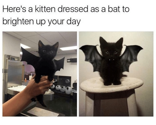 memes: Here's a kitten dressed as a bat to  brighten up your day