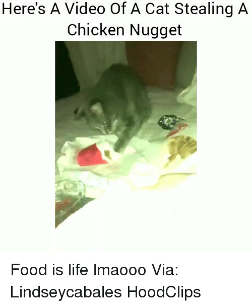 Food, Funny, and Life: Here's A Video Of A Cat Stealing A  Chicken Nugget Food is life lmaooo Via: Lindseycabales HoodClips