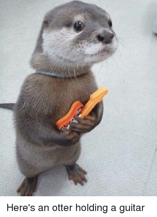 Otterly: Here's an otter holding a guitar