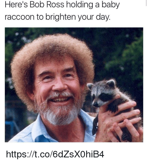 Memes, Bob Ross, and Raccoon: Here's Bob Ross holding a baby  raccoon to brighten your day https://t.co/6dZsX0hiB4