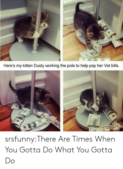 do what you gotta do: Here's my kitten Dusty working the pole to help pay her Vet bills srsfunny:There Are Times When You Gotta Do What You Gotta Do