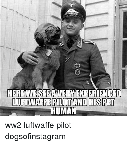 Memes, 🤖, and Ww2: HEREWESEEAVERY EXPERIENCED  LUFTWAFFE PILOT AND HIS PET  HUMAN ww2 luftwaffe pilot dogsofinstagram