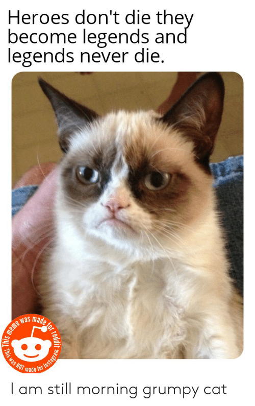 Die Meme: Heroes don't die they  become legends and  legends never die.  meme was  NOT made  Tor Instagra  readit w  This was I am still morning grumpy cat