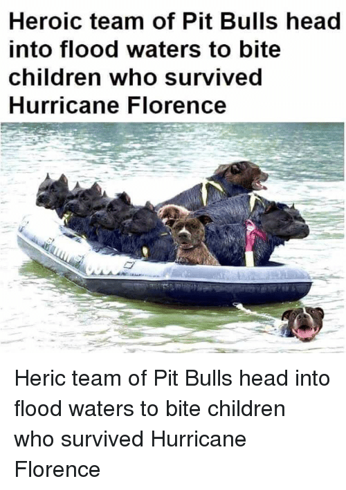florence: Heroic team of Pit Bulls head  into flood waters to bite  children who survived  Hurricane Florence Heric team of Pit Bulls head into flood waters to bite children who survived Hurricane Florence