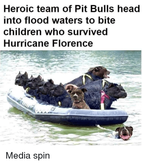 florence: Heroic team of Pit Bulls head  into flood waters to bite  children who survived  Hurricane Florence Media spin