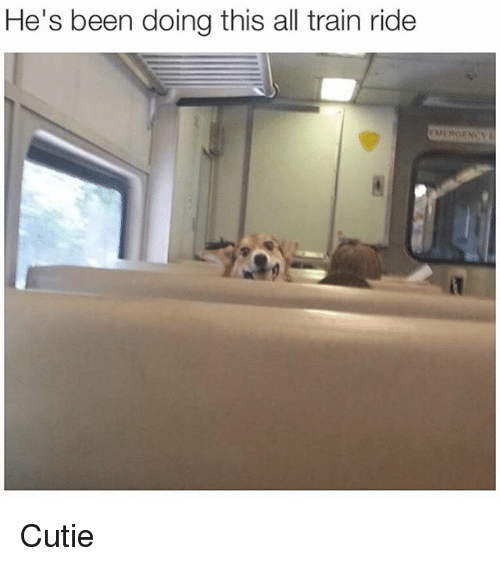 train ride: He's been doing this all train ride Cutie