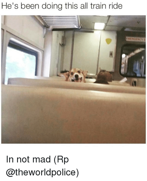 train ride: He's been doing this all train ride In not mad (Rp @theworldpolice)