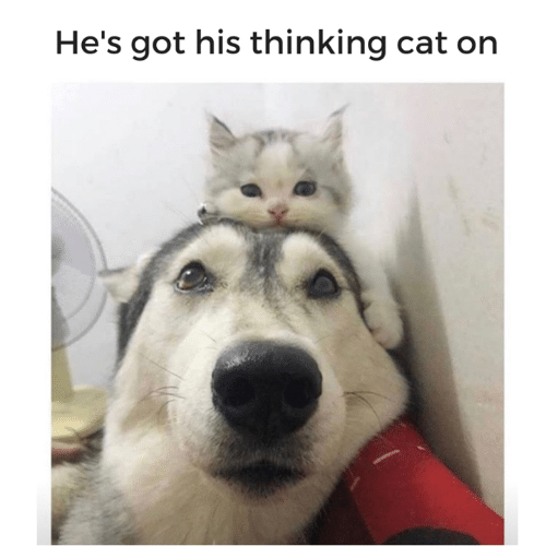 Thinking Cat: He's got his thinking cat on