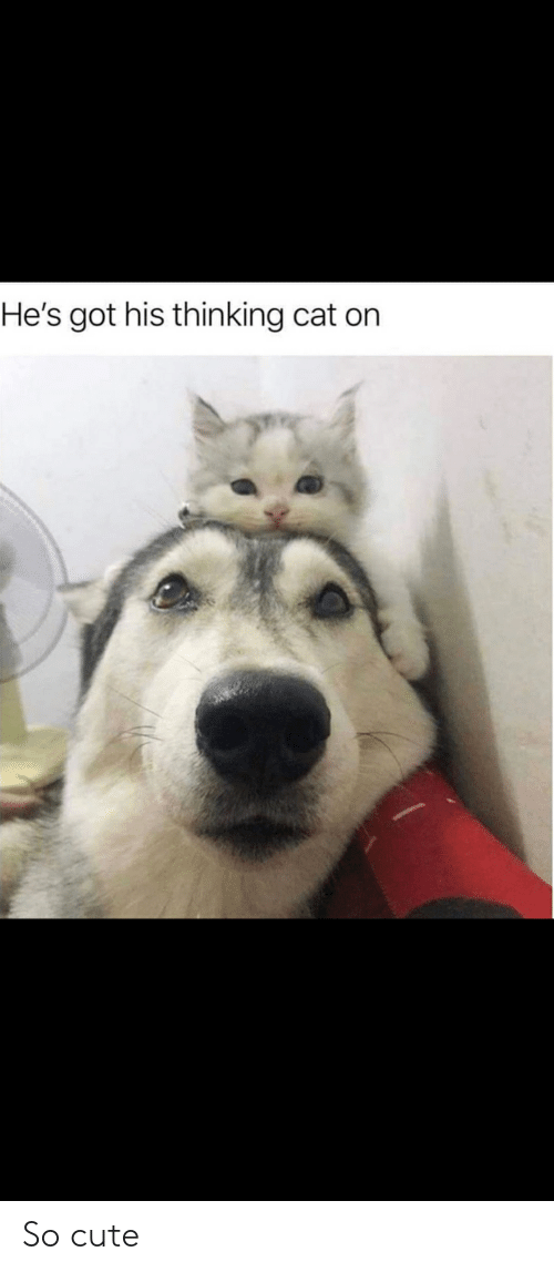 Thinking Cat: He's got his thinking cat on So cute