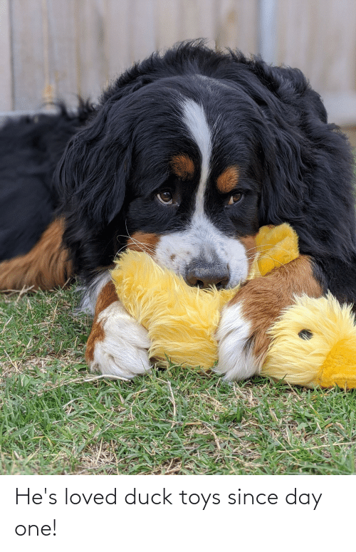 Toys: He's loved duck toys since day one!
