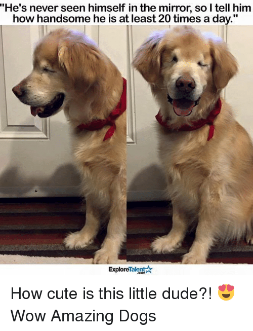 """the mirror: """"He's never seen himself in the mirror, so I tell him  how handsome he is at least 20 times a day  Talent A  Explore How cute is this little dude?! 😍  Wow Amazing Dogs"""