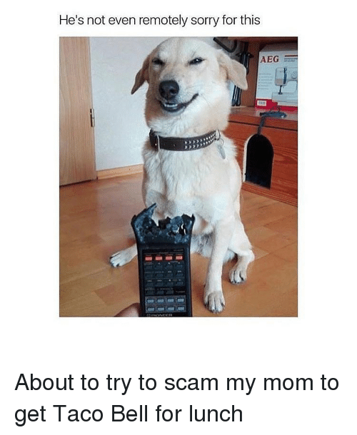 Sorry, Taco Bell, and Mom: He's not even remotely sorry for this  AEG About to try to scam my mom to get Taco Bell for lunch