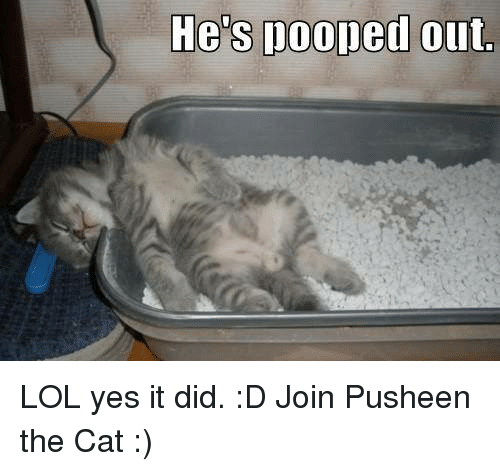 Grumpy Cat, Pusheen, and Cat: He's pooped out LOL yes it did. :D  Join Pusheen the Cat :)