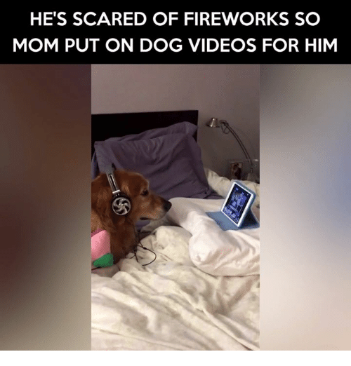 Memes, Scare, and Fireworks: HE'S SCARED OF FIREWORKS SO  MOM PUT ON DOG VIDEOS FOR HIM
