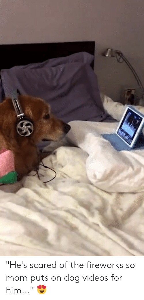 "dog videos: ""He's scared of the fireworks so mom puts on dog videos for him..."" 😍"