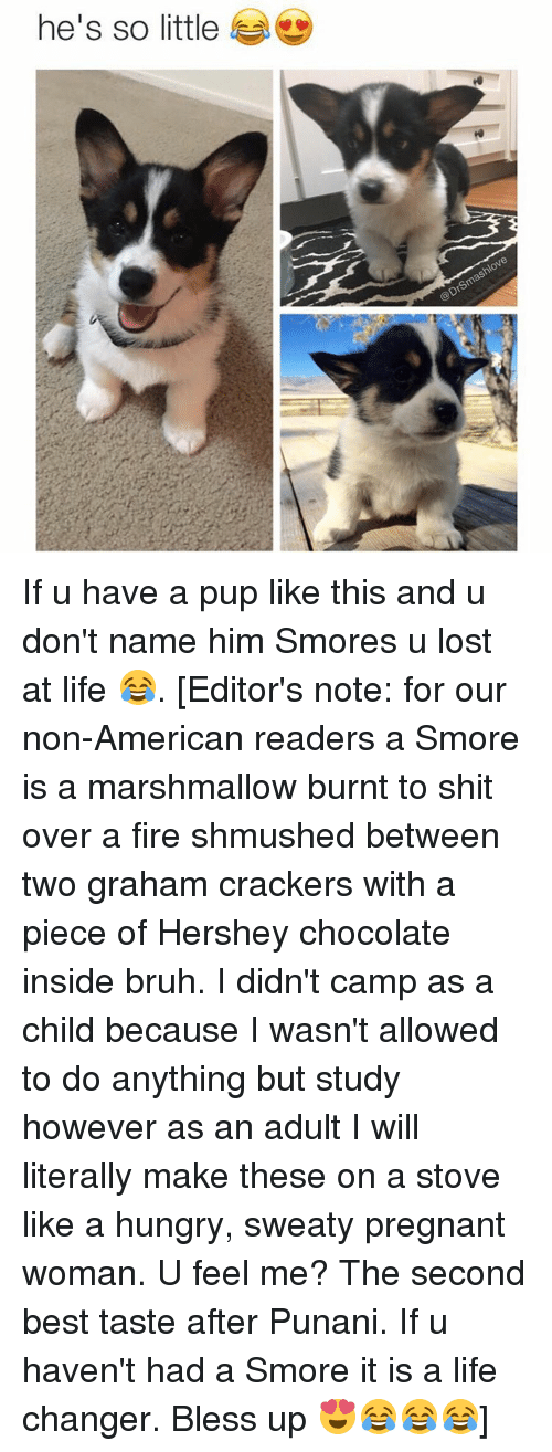 graham crackers: he's so little If u have a pup like this and u don't name him Smores u lost at life 😂. [Editor's note: for our non-American readers a Smore is a marshmallow burnt to shit over a fire shmushed between two graham crackers with a piece of Hershey chocolate inside bruh. I didn't camp as a child because I wasn't allowed to do anything but study however as an adult I will literally make these on a stove like a hungry, sweaty pregnant woman. U feel me? The second best taste after Punani. If u haven't had a Smore it is a life changer. Bless up 😍😂😂😂]