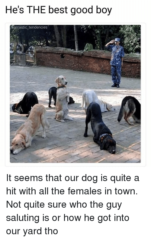 Ironic, Best, and Good: He's THE best good boy  sarcastic tendencies It seems that our dog is quite a hit with all the females in town. Not quite sure who the guy saluting is or how he got into our yard tho