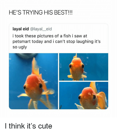 Cute, Saw, and Ugly: HE'S TRYING HIS BEST!!!  layal eid @layal_eid  i took these pictures of a fish i saw at  petsmart today and i can't stop laughing it's  so ugly I think it's cute