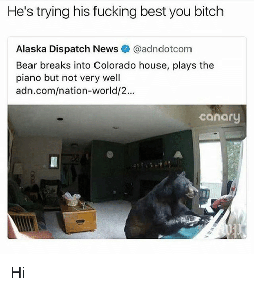 Dispatcher: He's trying his fucking best you bitch  Alaska Dispatch News@adndotcom  Bear breaks into Colorado house, plays the  piano but not very well  adn.com/nation-world/2...  canary Hi