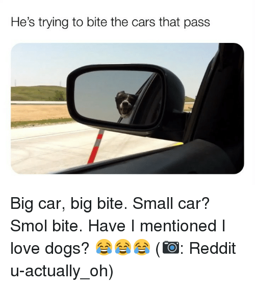 the cars: He's trying to bite the cars that pass Big car, big bite. Small car? Smol bite. Have I mentioned I love dogs? 😂😂😂 (📷: Reddit u-actually_oh)