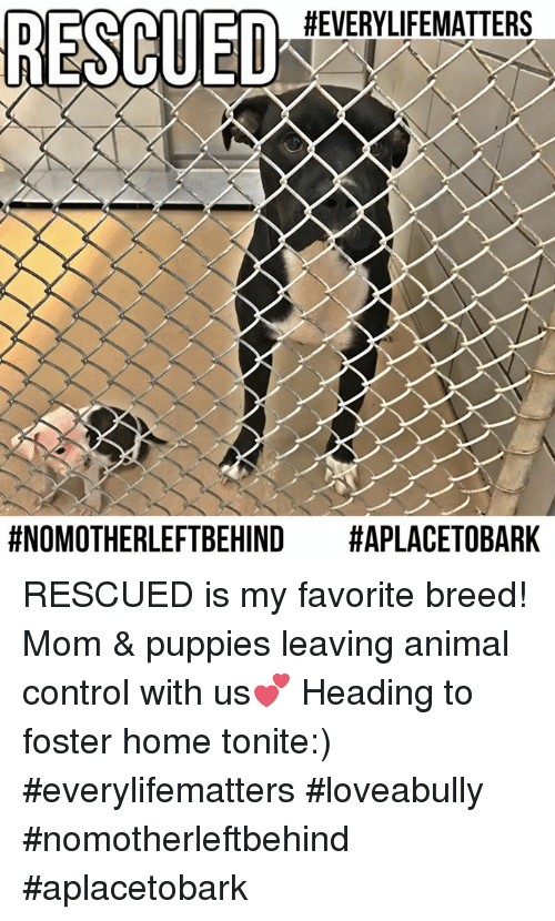 Memes, Puppies, and Puppy: HEVERYLIFEMATTERS  fNOMOTHERLEFTBEHIND  HAPLACETOBARK RESCUED is my favorite breed! Mom & puppies leaving animal control with us💕 Heading to foster home tonite:)  #everylifematters #loveabully #nomotherleftbehind #aplacetobark