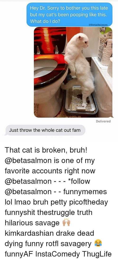 Bruh, Cats, and Drake: Hey Dr. Sorry to bother you this late  but my cat's been pooping like this.  What do I do?  @BetaSalmon  Delivered  Just throw the whole cat out fam That cat is broken, bruh! @betasalmon is one of my favorite accounts right now @betasalmon - - - *follow @betasalmon - - funnymemes lol lmao bruh petty picoftheday funnyshit thestruggle truth hilarious savage 🙌🏽 kimkardashian drake dead dying funny rotfl savagery 😂 funnyAF InstaComedy ThugLife
