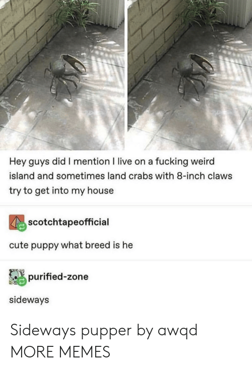 crabs: Hey guys did I mention I live on a fucking weird  island and sometimes land crabs with 8-inch claws  try to get into my house  scotchtapeofficial  cute puppy what breed is he  purified-zone  sideways Sideways pupper by awqd MORE MEMES