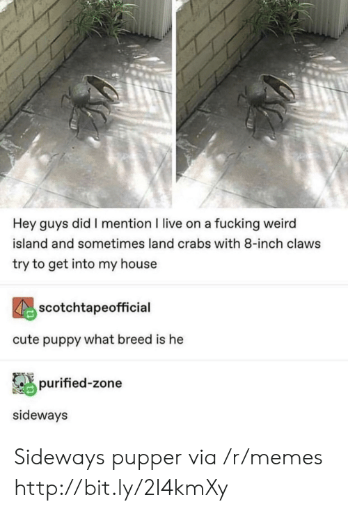 crabs: Hey guys did I mention I live on a fucking weird  island and sometimes land crabs with 8-inch claws  try to get into my house  scotchtapeofficial  cute puppy what breed is he  purified-zone  sideways Sideways pupper via /r/memes http://bit.ly/2I4kmXy