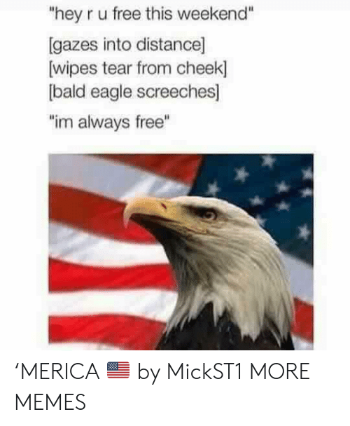 "wipes tear: ""hey r u free this weekend""  [gazes into distance]  wipes tear from cheek]  bald eagle screeches]  ""im always free"" 'MERICA 🇺🇸 by MickST1 MORE MEMES"