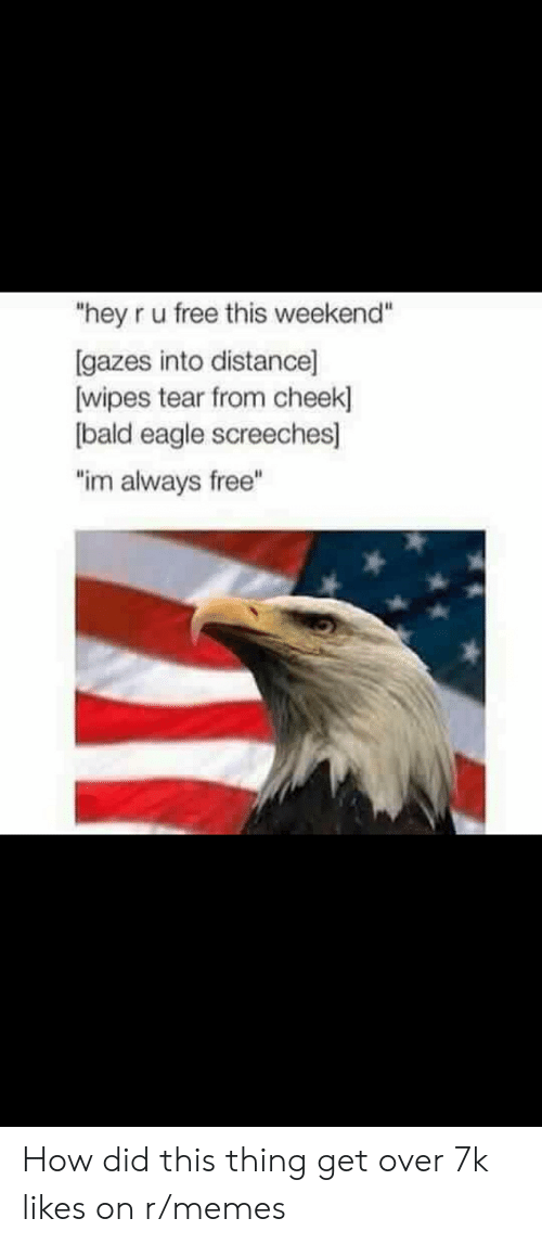 """wipes tear: """"hey r u free this weekend""""  [gazes into distance]  wipes tear from cheek  bald eagle screeches  """"im always free"""" How did this thing get over 7k likes on r/memes"""