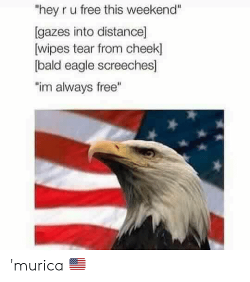 """wipes tear: """"hey r u free this weekend""""  Igazes into distance]  wipes tear from cheek  bald eagle screeches]  """"im always free"""" 'murica 🇺🇸"""