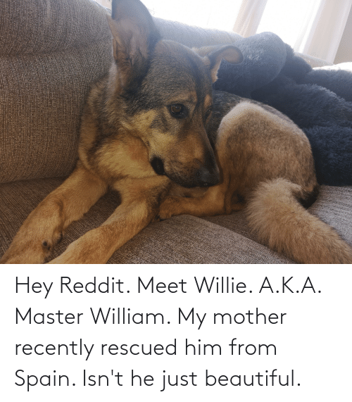 willie: Hey Reddit. Meet Willie. A.K.A. Master William. My mother recently rescued him from Spain. Isn't he just beautiful.