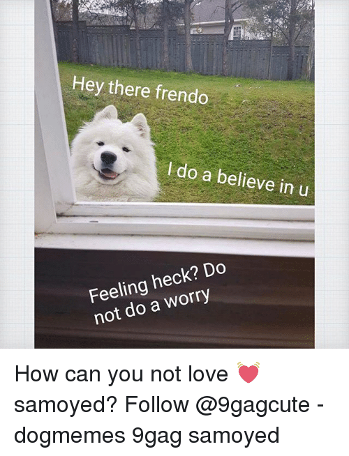 9gag, Love, and Memes: Hey there frendo  I do a believe in u  Feeling heck? Do  not do a worry How can you not love 💓 samoyed? Follow @9gagcute - dogmemes 9gag samoyed