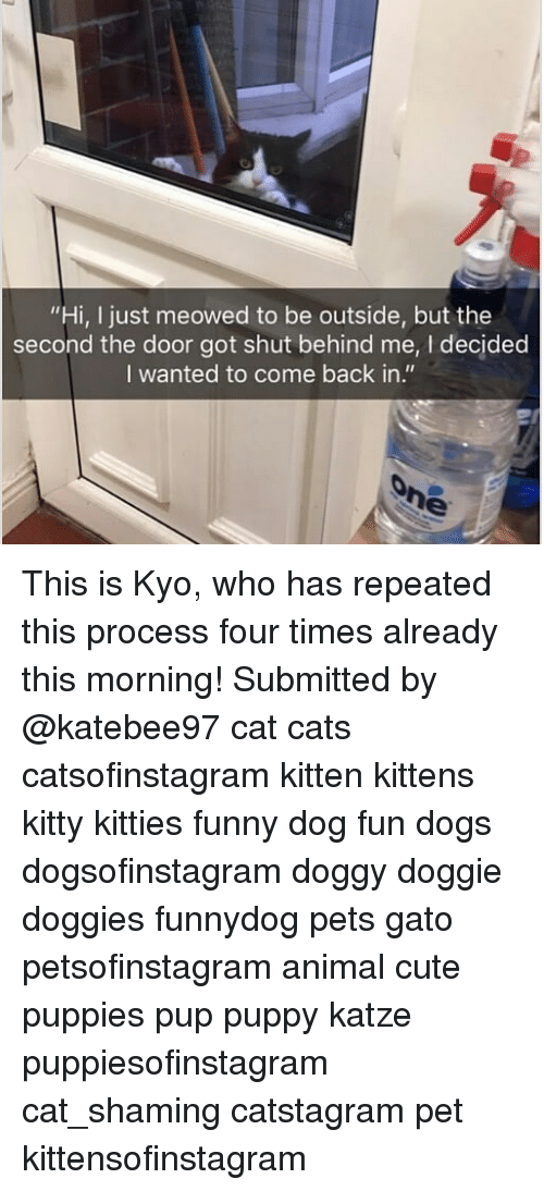 """Shaming: """"Hi, I just meowed to be outside, but the  second the door got shut behind me, I decided  I wanted to come back in."""" This is Kyo, who has repeated this process four times already this morning! Submitted by @katebee97 cat cats catsofinstagram kitten kittens kitty kitties funny dog fun dogs dogsofinstagram doggy doggie doggies funnydog pets gato petsofinstagram animal cute puppies pup puppy katze puppiesofinstagram cat_shaming catstagram pet kittensofinstagram"""