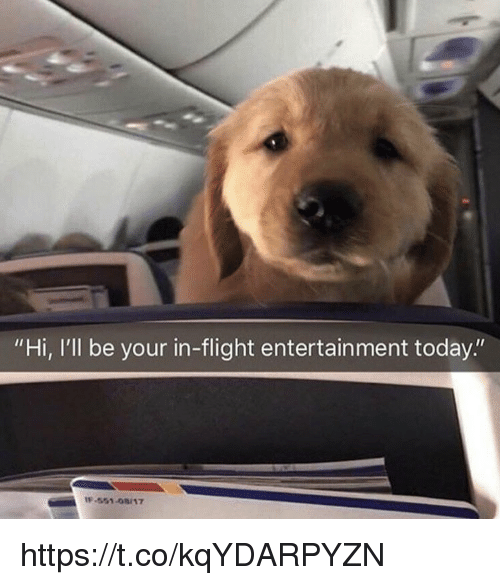 """Memes, Flight, and Today: """"Hi, I'll be your in-flight entertainment today.""""  -551-08/17 https://t.co/kqYDARPYZN"""