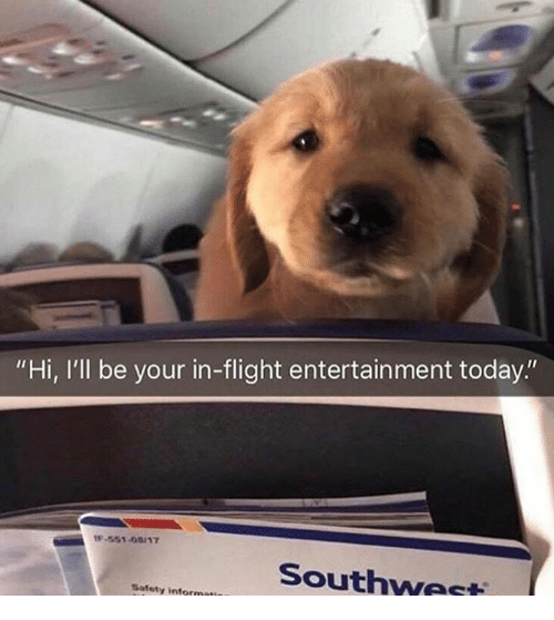 """Flight, Southwest, and Today: """"Hi, I'll be your in-flight entertainment today.""""  -551-08/17  Southwest  Safety"""