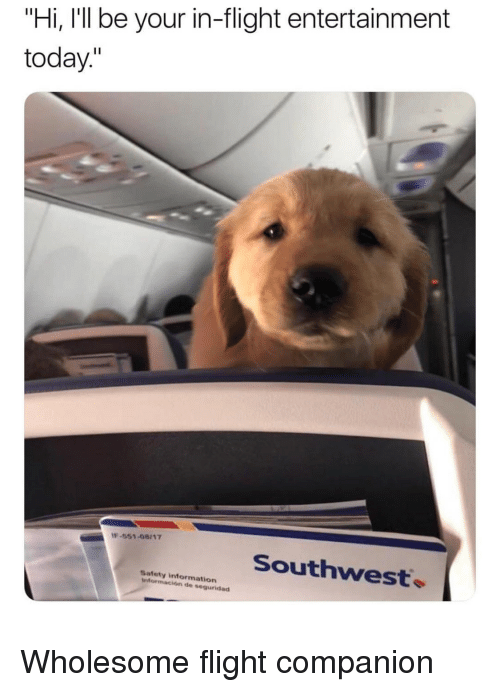 "Flight, Information, and Southwest: ""Hi, I'll be your in-flight entertainment  today.""  -551-08117  Southwest.  Safety information  información de seguridad <p>Wholesome flight companion</p>"