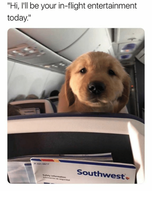 "Flight, Information, and Southwest: ""Hi, I'll be your in-flight entertainment  today""  Southwest.  Safety information  rtormaton de"