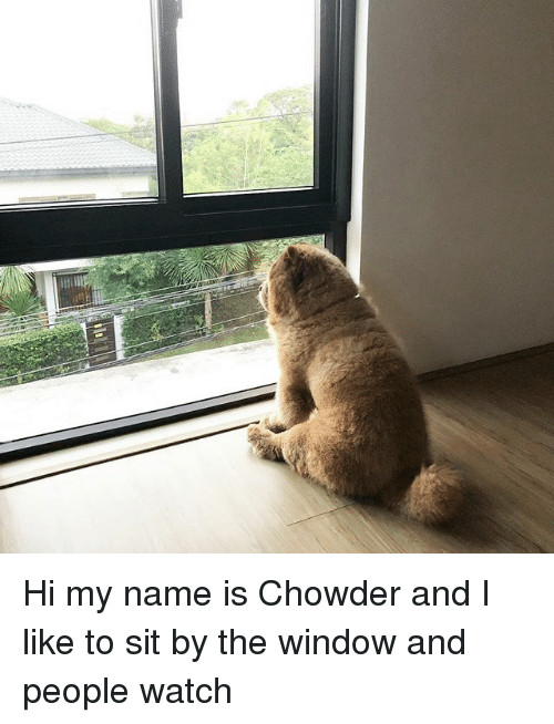 Chowder: Hi my name is Chowder and I like to sit by the window and people watch