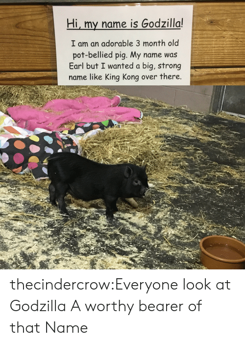 earl: Hi, my name is Godzilla!  I am an adorable 3 month old  pot-bellied pig. My name was  Earl but I wanted a big, strong  name like King Kong over there. thecindercrow:Everyone look at Godzilla  A worthy bearer of that Name