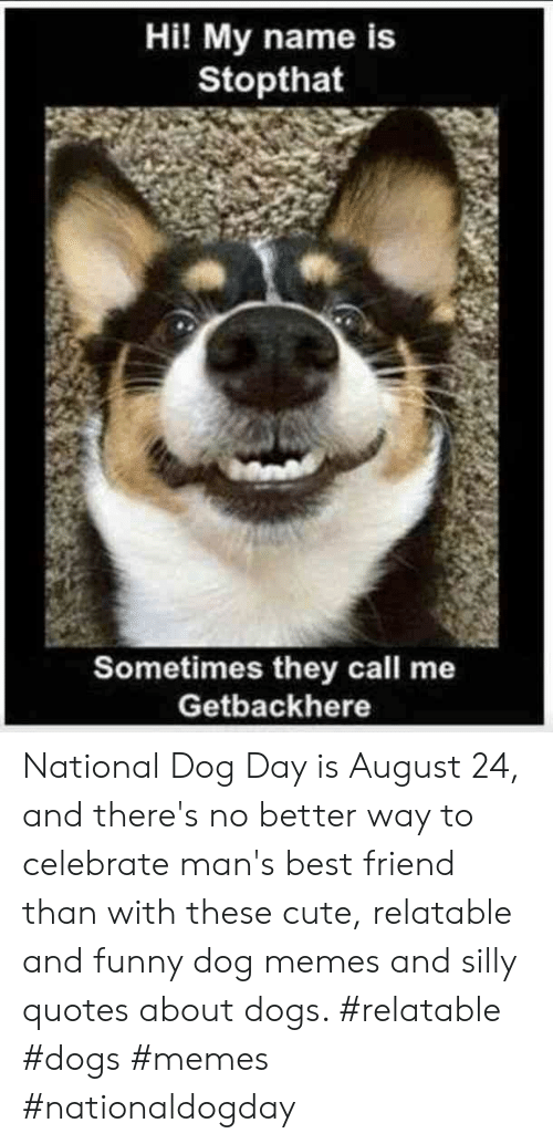 Silly Quotes: Hi! My name is  Stopthat  Sometimes they call me  Getbackhere National Dog Day is August 24, and there's no better way to celebrate man's best friend than with these cute, relatable and funny dog memes and silly quotes about dogs.  #relatable #dogs #memes #nationaldogday