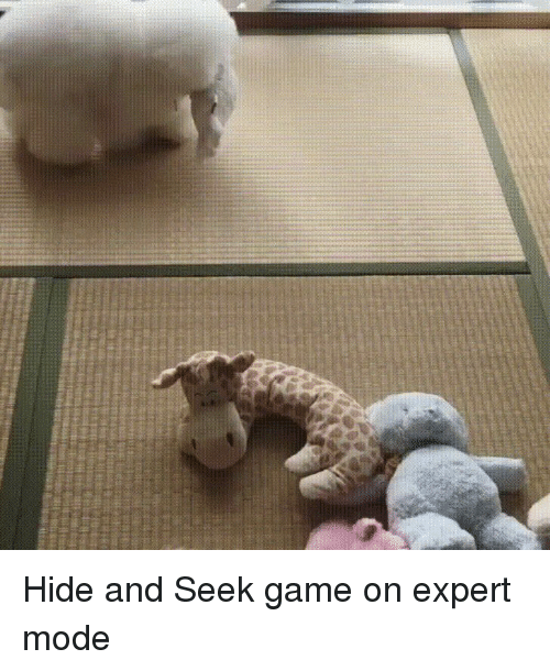 Funny, Game, and Hide: Hide and Seek game on expert mode