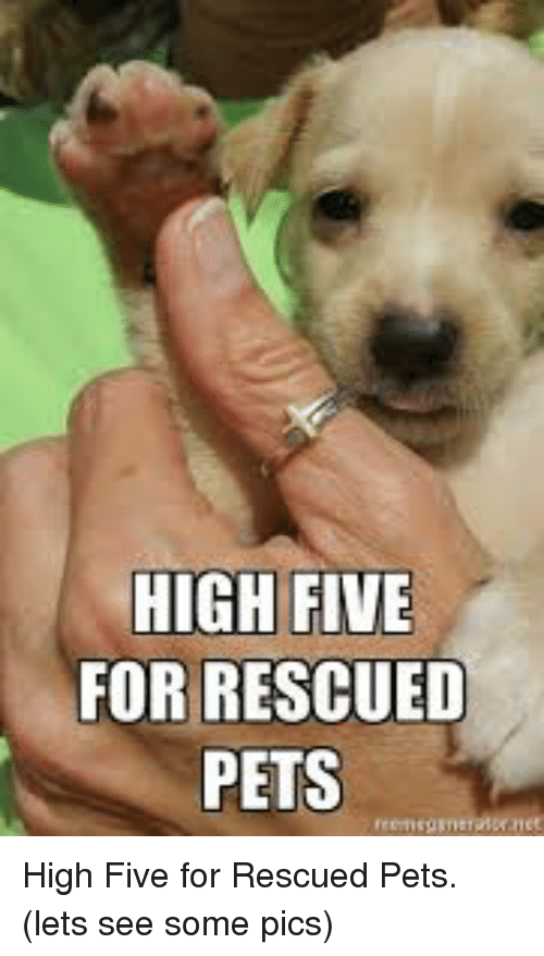 Memes, Pets, and 🤖: HIGH FIVE  FOR RESCUED  PETS High Five for Rescued Pets.      (lets see some pics)