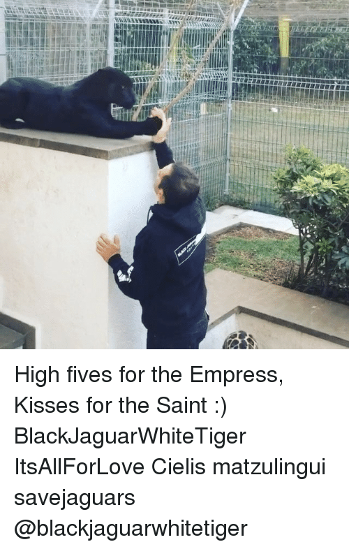 Memes, 🤖, and Saint: High fives for the Empress, Kisses for the Saint :) BlackJaguarWhiteTiger ItsAllForLove Cielis matzulingui savejaguars @blackjaguarwhitetiger