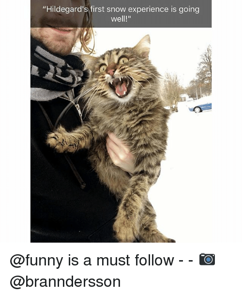 """Funny, Snow, and Experience: """"Hildegard's first snow experience is going  well!"""" @funny is a must follow - - 📷 @branndersson"""
