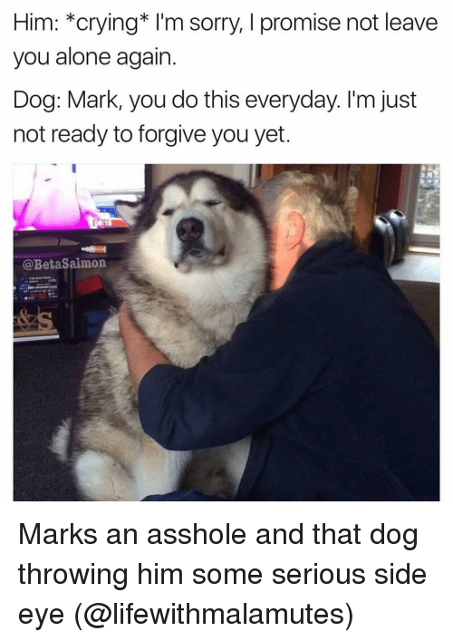 Side Eyed: Him: *crying* I'm sorry, I promise not leave  you alone again  Dog: Mark, you do this everyday. I'm just  not ready to forgive you yet.  @BetaSalmon Marks an asshole and that dog throwing him some serious side eye (@lifewithmalamutes)