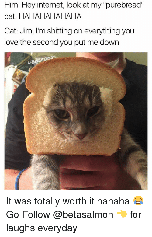 "Internet, Love, and Memes: Him: Hey internet, look at my ""purebread""  cat. HAHAHAHAHAHA  Cat: Jim, I'm shitting on everything you  love the second you put me down  Salmon  @Beta It was totally worth it hahaha 😂 Go Follow @betasalmon 👈 for laughs everyday"