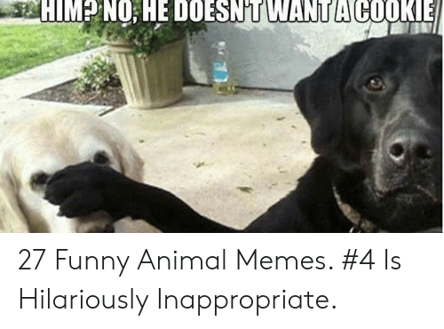 Hilariously Inappropriate: HIM NO;HE DOESN'T WANT A COOKE 27 Funny Animal Memes. #4 Is Hilariously Inappropriate.
