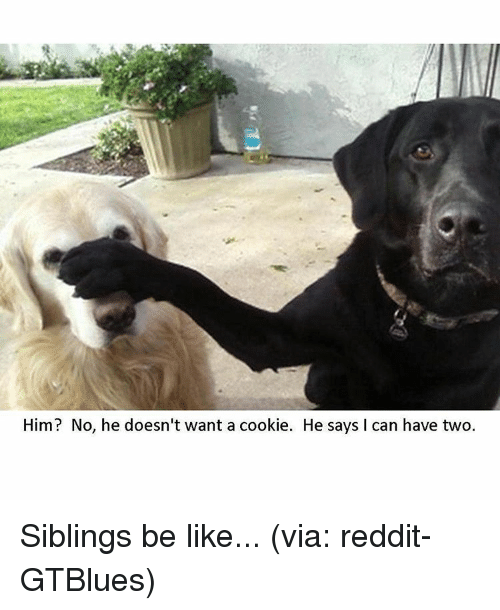 SIZZLE: Him? No, he doesn't want a cookie. He says l can have two. Siblings be like... (via: reddit-GTBlues)